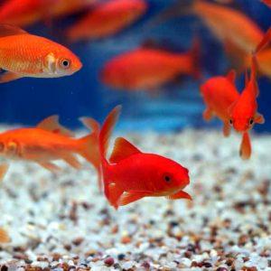 Рыбам