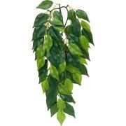 Растения для рептилий