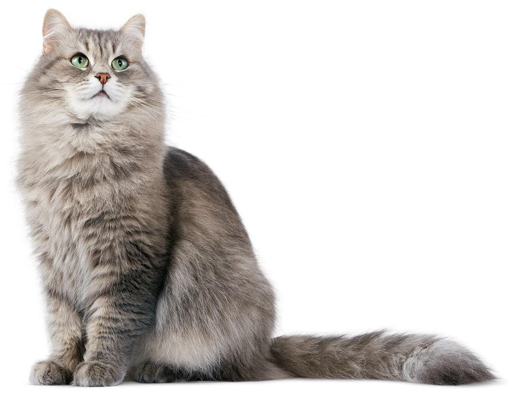 Зоотовары для кошек
