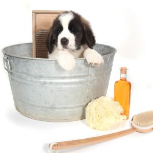 Средства по уходу за собаками