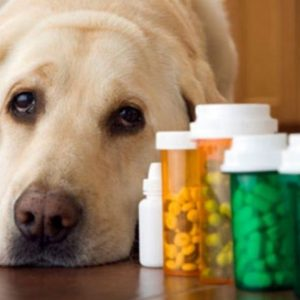Ветеринарные препараты для собак